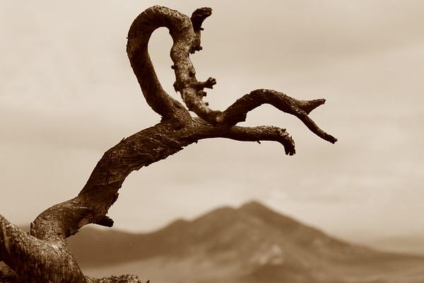 Twisted Juniper over Heiser Peak