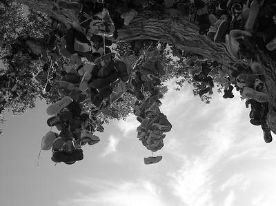 Hwy 50 shoe tree