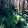 Wilderness Volunteers: 2017 Never Summer Wilderness, Arapahoe-Roosevelt National Forest (Colorado) Service Trip