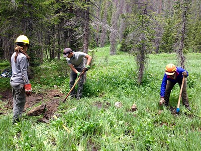 Wilderness Volunteers: 2017 Never Summer Wilderness, Arapahoe-Roosevelt National Forest (Colorado) Service Trip