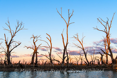 Last light on the drowned gums, Menindee Lakes, NSW