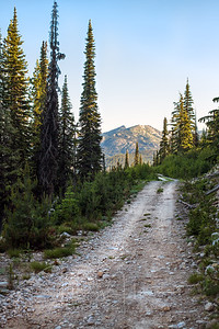 Mountain Logging Road