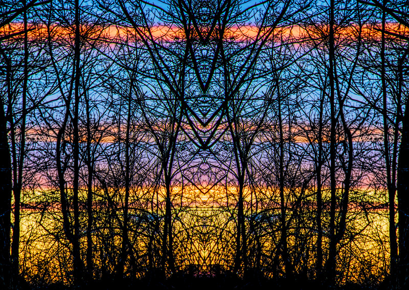 Mystic Trees Sunset