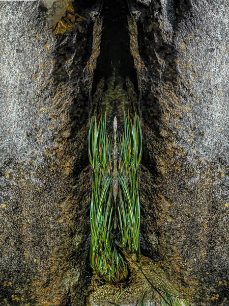 Mystic Grass Cavern