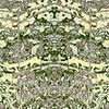 Mayan Half Totem :  Symmetry Series #14A