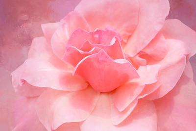 Pink Rose Romance