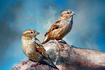 American Tree Sparrows Art