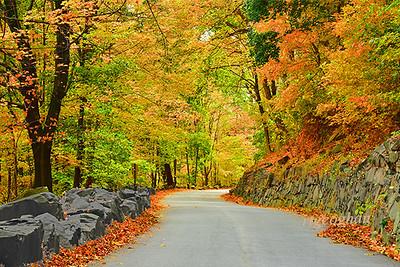 Autumn Trees NJ Palisades
