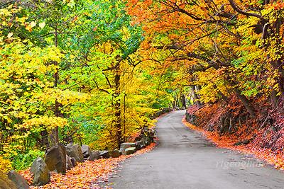 Winding Autumn Road NJ Palisades