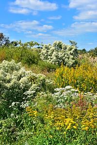 Mill Creek Autumn Wildflowers