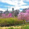 Vranch Brook Park Lake-Cherry Blossom Time