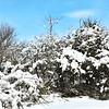 NJ Madowlands Spring Snow 1