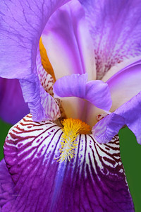 Iris-Frieda Mohr