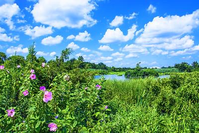 Wetlands Summer Beauty