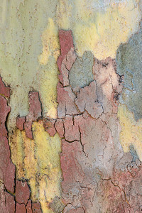 Tree Bark Nature Abstract