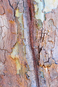 Tree Trunk Abstract
