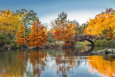 Autumn Gold at Central Park Pond