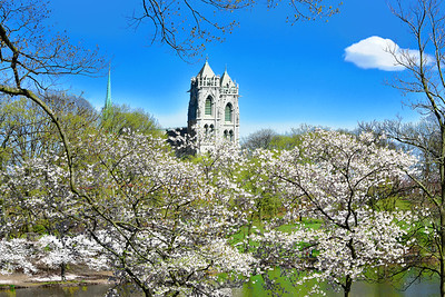 NJ Cherry Blossoms and Basilica Towers