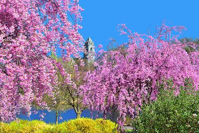 A Joyous Burst of Springtime