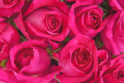 Sentimental Pink Valentine Roses
