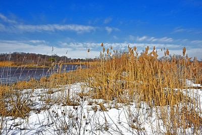 NJ Marshland Winter Scene