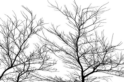 Winter Wind Dance of the Trees