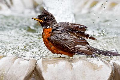 Splish-Splash I'm Loving My Bath -