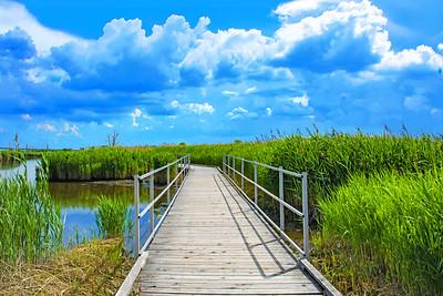 Marsh Boardwalk N.J. Meadowlands