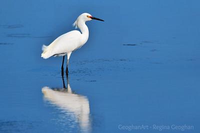 Snowy Egret NJ Meadowlands