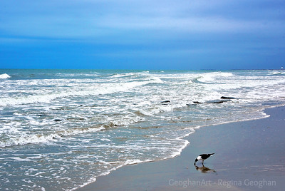 Sky, Surf and a Hungry Gull -  NJ Shore
