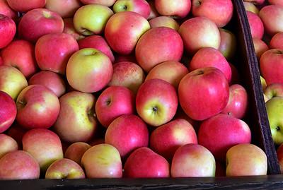 Apple Picking Time NJ
