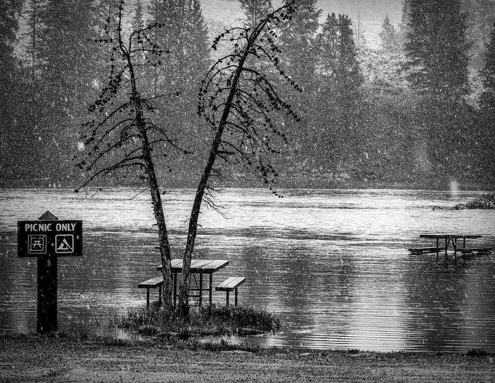 Spring Picnic In Yellowstone