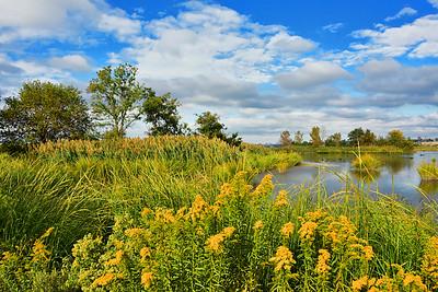 NJ Meadowlands Golden Autumn