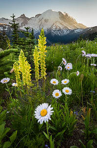 Mount Rainier Wildflower Bouquet