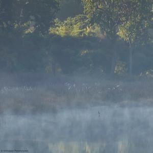Bird in Mist