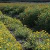 IRC Seed Farm 031518-4
