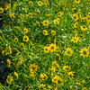 IRC Seed Farm 031518-6