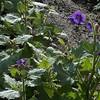 IRC Seed Farm 031518-9