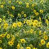 IRC Seed Farm 031518-21