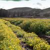 IRC Seed Farm 031518-5
