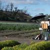 IRC Seed Farm 031518-3