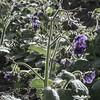 IRC Seed Farm 031518-11