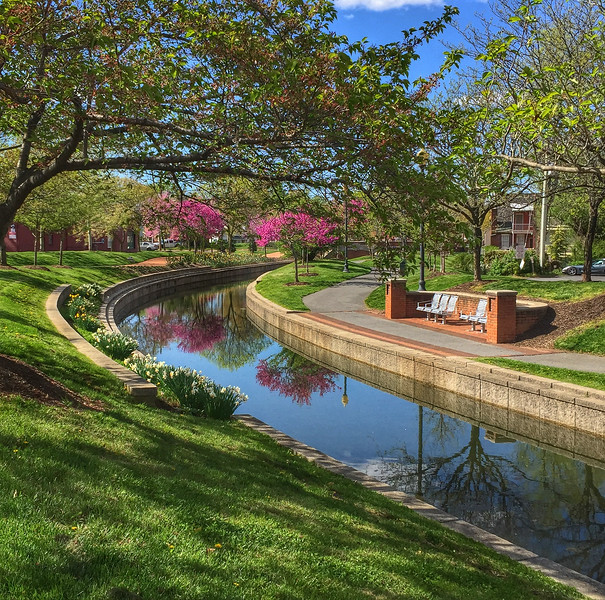 Springtime on Carroll Creek