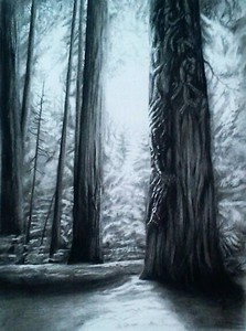 """Sacred Sequoia - Ethereal Glow"" (charcoal) by Luke Engle"