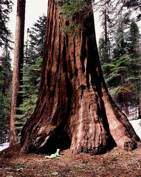 """""""Redwood Baby"""" (photography) by Walt Hug"""