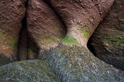 Hopewell Rock Formation
