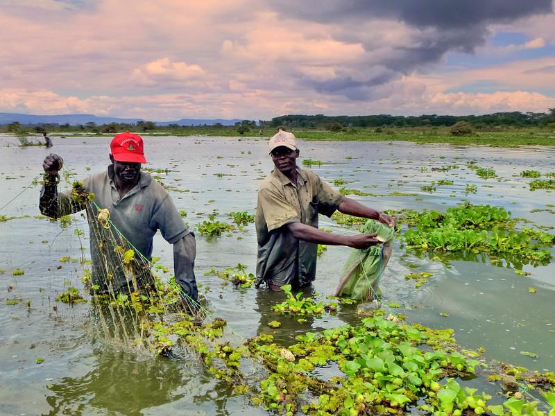 Tilapia fishermen Lake naivasha