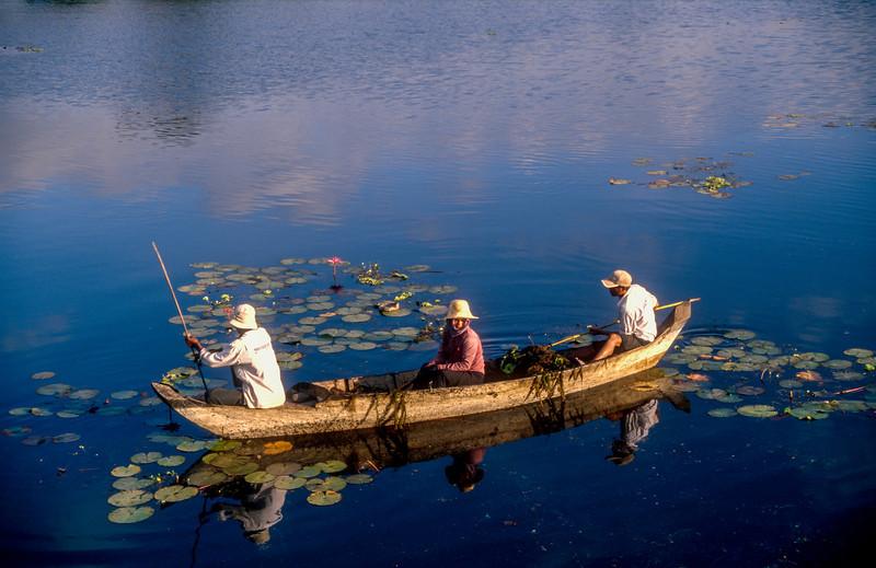 Water Lillies, Angkor Wat