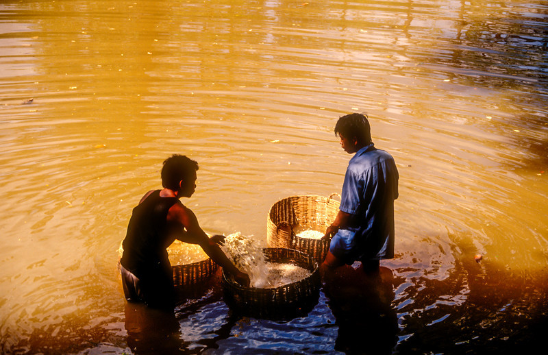 Washing Rice, Siem Reap