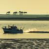 Return fishing  -  Retour de pêche  -  Fouras